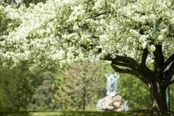 Spring in Washington Park