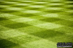 manicured lawn in right field