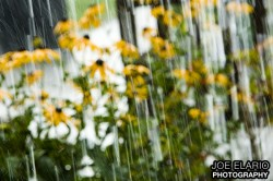 a detail of the rain